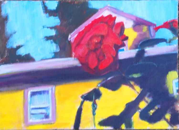 Red rose in front of yellow house
