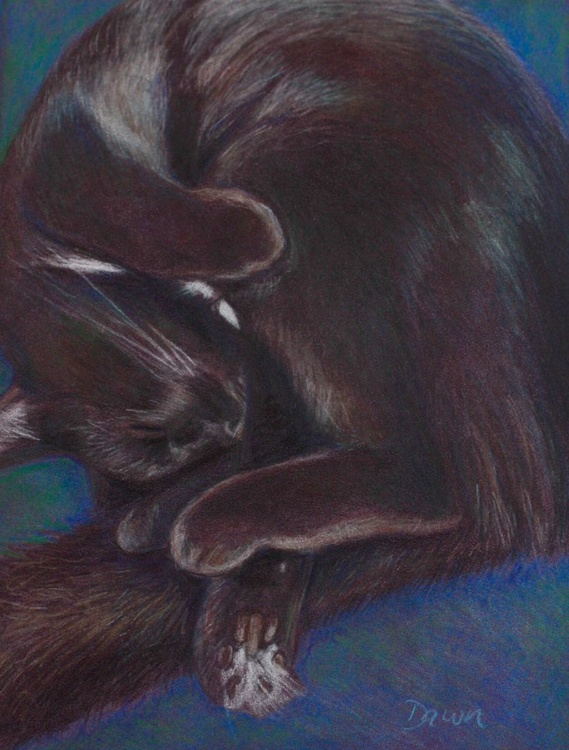 A Tangle of Paws - Image 0