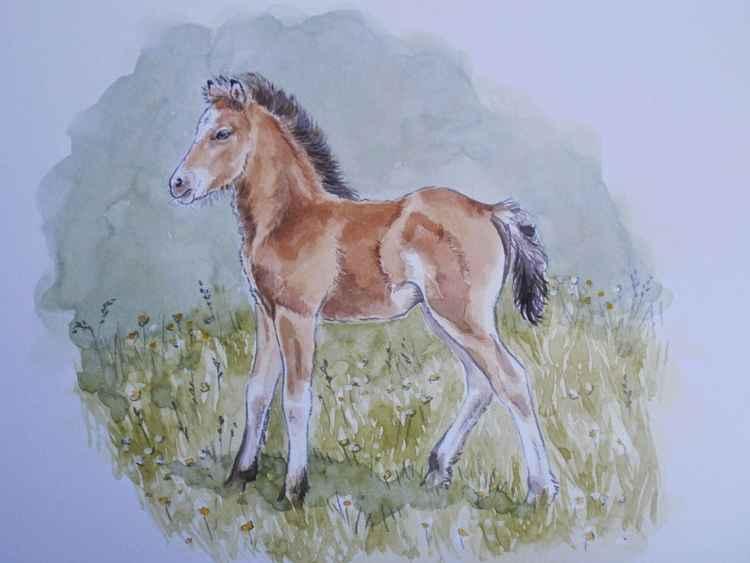 Bay foal -