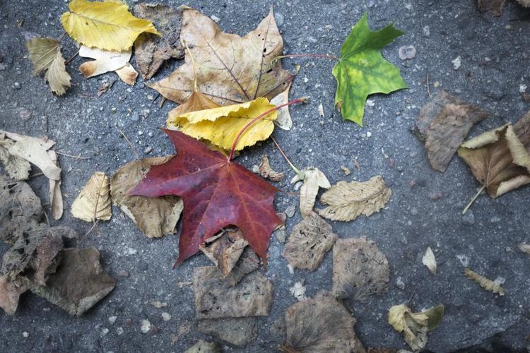 Leaves - Image 0