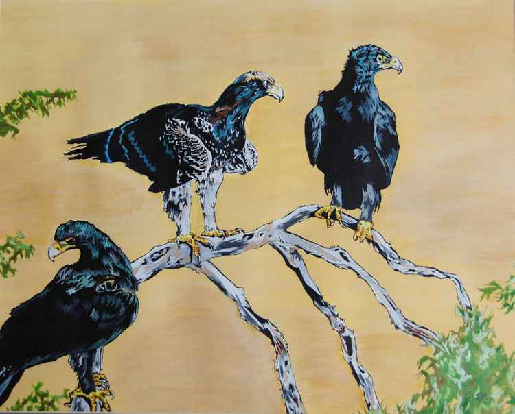 Black eagles ( hunters )