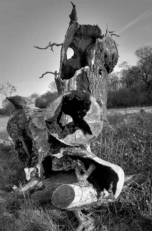 Faces of Nature: Ancient trees 4 -