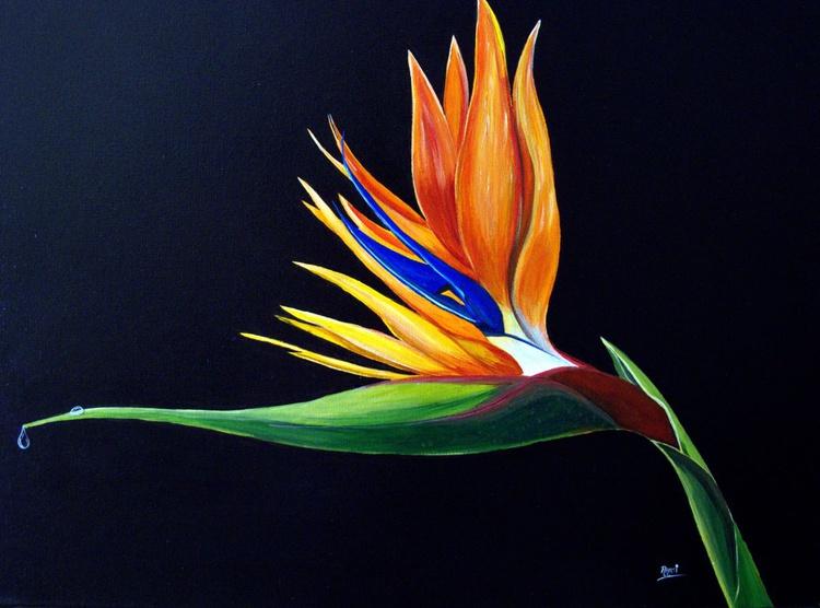 Strelitzia - Bird Of Paradise - Image 0