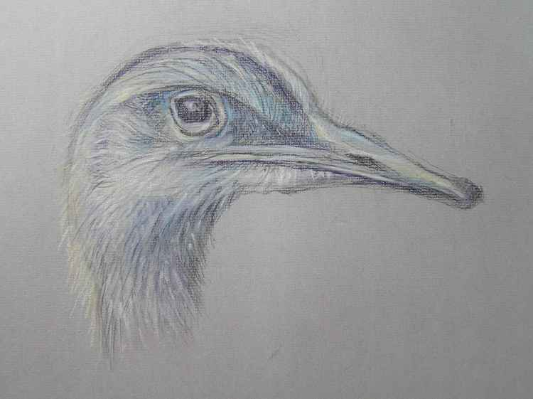 Portrait of a Rhea