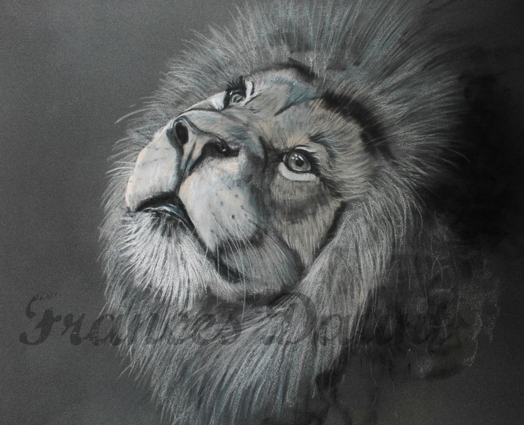 The Daydreamer, framed pastel drawing of a lion - Image 0