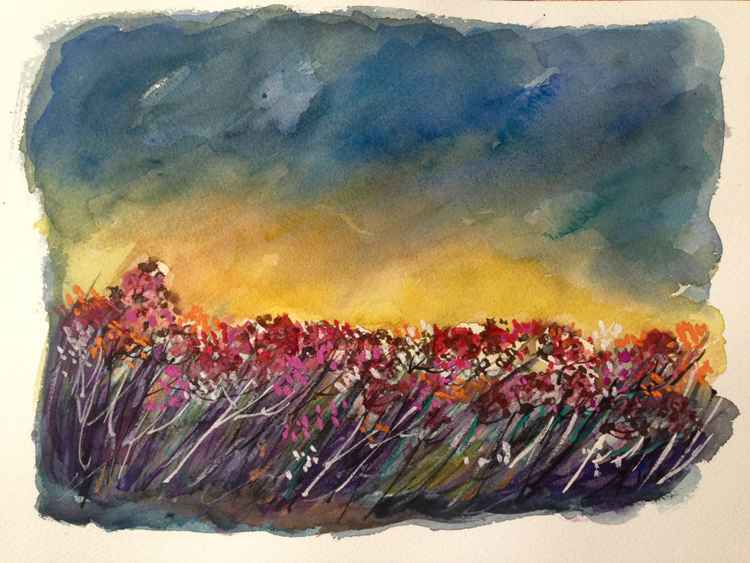 Early morning flower field -