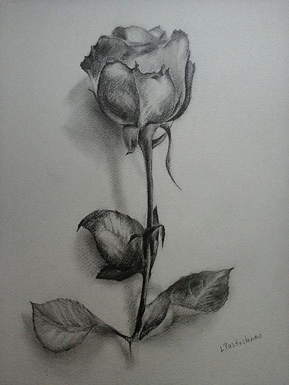 Single flower - Image 0