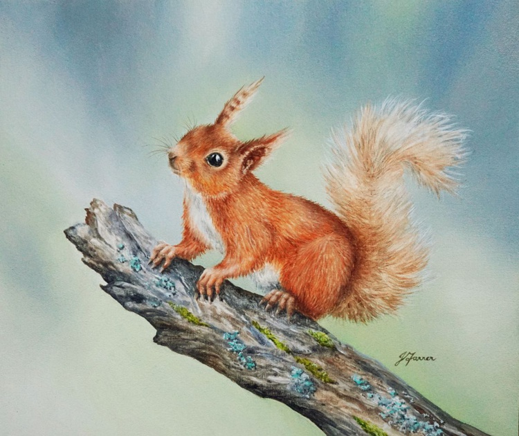 Red Squirrel on Mossy Branch - Image 0