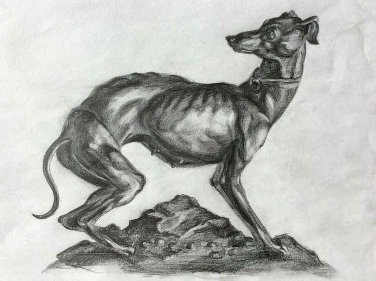 Greyhound ( italian )
