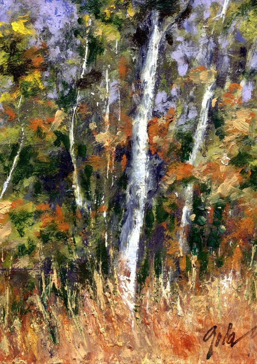 A Wyoming Stand of Birches - Image 0