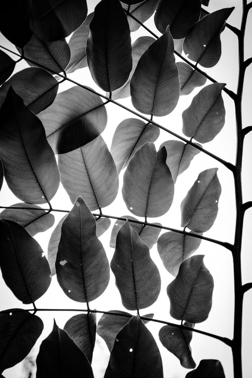 """Branches and Leaves"" - Image 0"