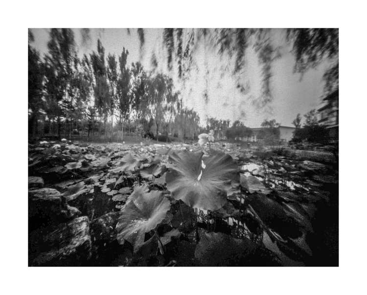 Lotus 4 - Image 0