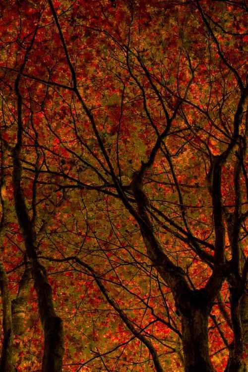Fireglow -