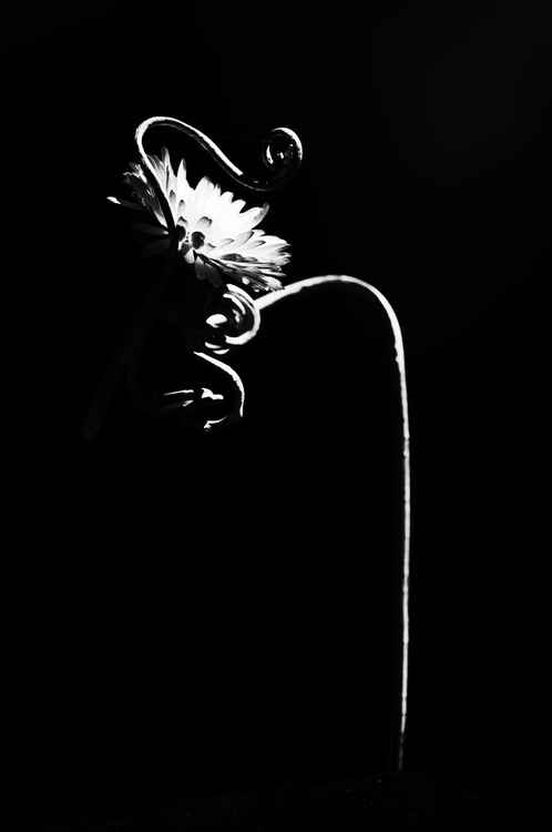 The Dark beauty -