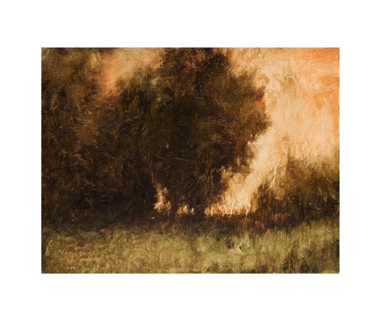 Tree Shadows 6.4.15 - Image 0