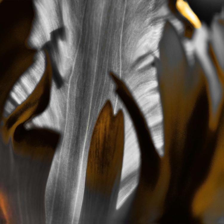 Being Inside - Monoprint - Image 0