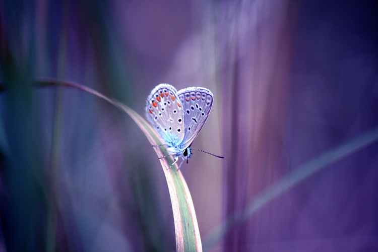 Butterfly dream -