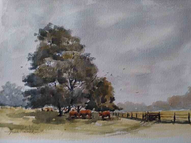 Saltram in the rain -