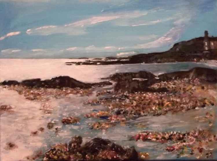 Mussel Shoreline NW Scotland