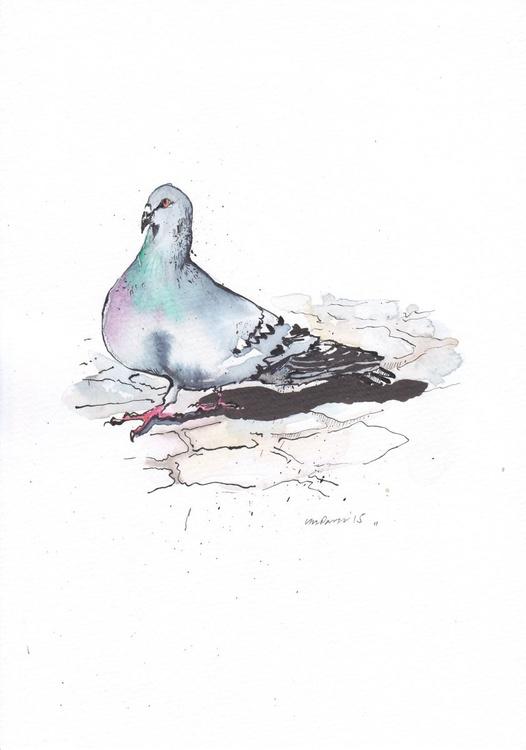 Strolling Pigeon - Image 0