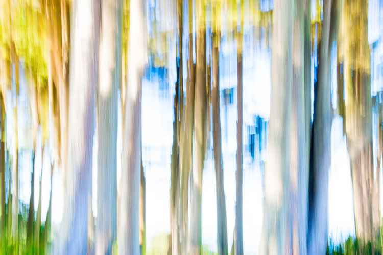 Moving Trees II -