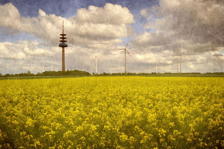 Rapeseed Field - Canvas 75 x 50 cm - Image 0