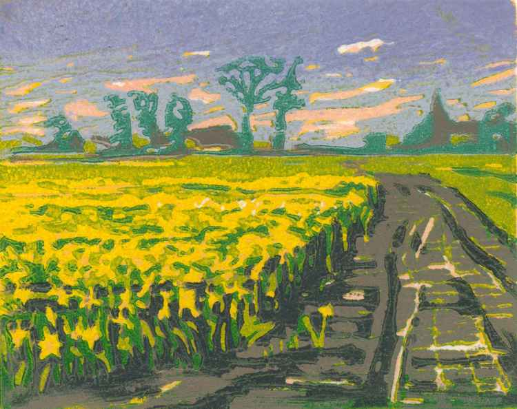Daffodil Fields -