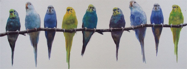 Row of Budgies - Image 0