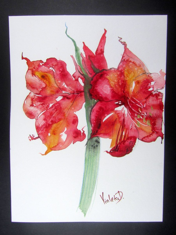 Red Amaryllis (Hippeastrum species) 3 - Image 0