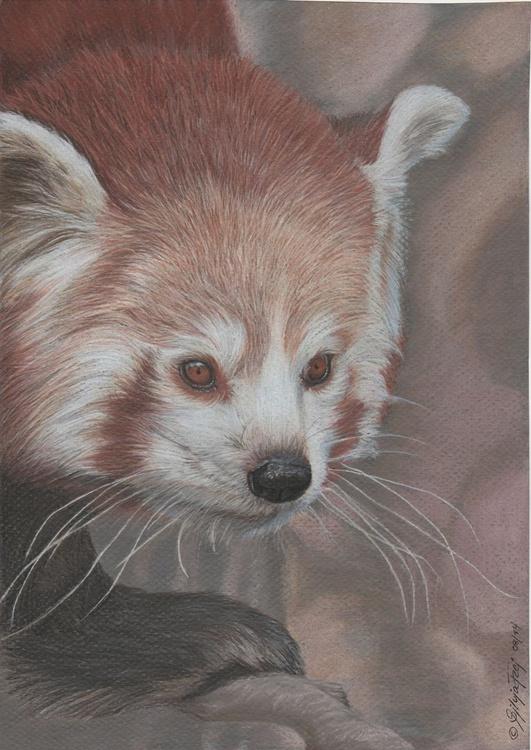 Red Panda - Image 0