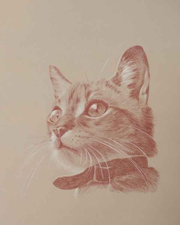 Kitten's Wonder