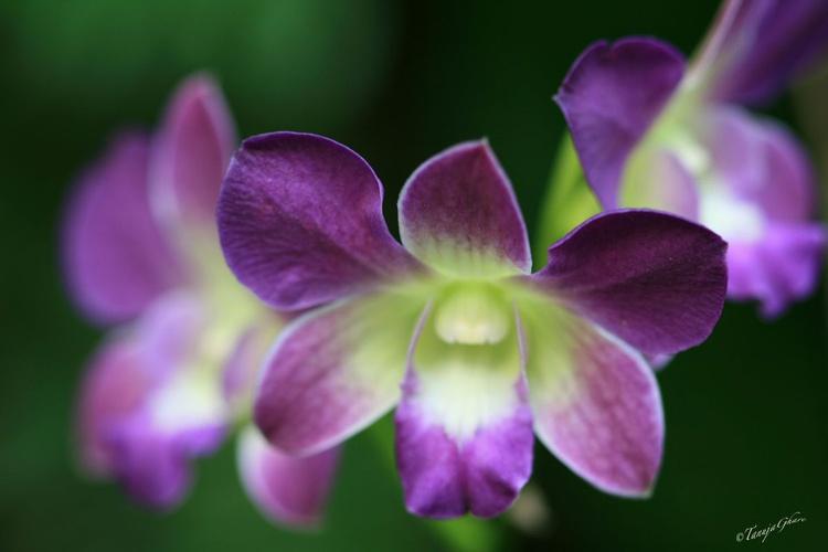 Orchid wonder - Image 0