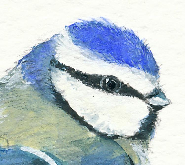 Blue Tit study - Image 0