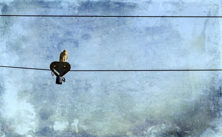 An Owl - Image 0