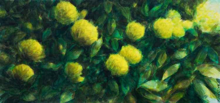 Yellow flowers -