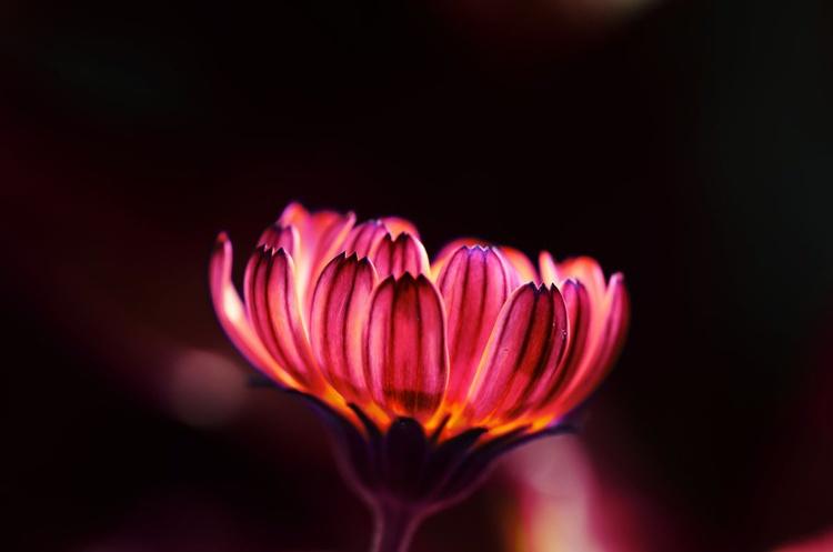 Violet Hue - Image 0