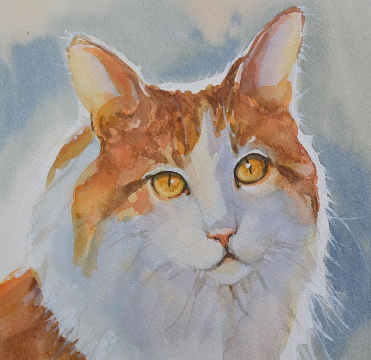 Red And White Cat. - Image 0