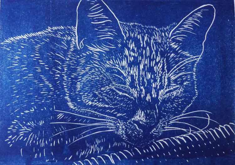 Sleeping Cat -