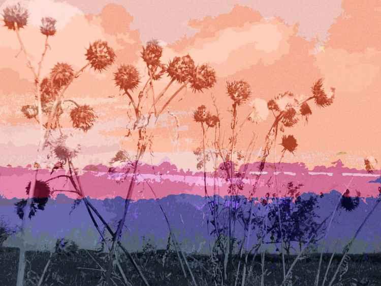 Pink Dried Flower Heads -