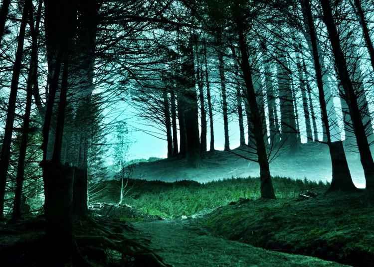 Forest of Secrecy - Isle of Skye - 11x14