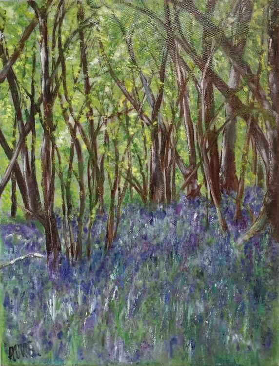 Bluebell Woods -
