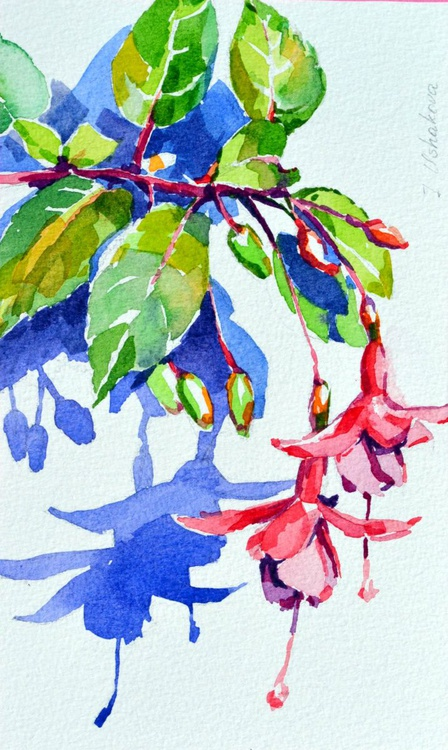 Fuchsia - Image 0