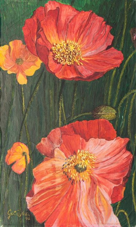 Papaveri Poppies - Image 0