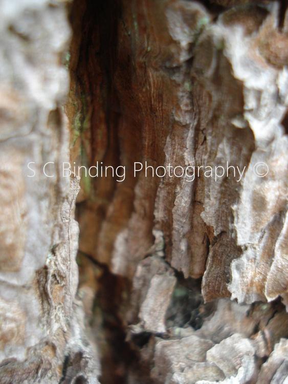 Bark Duo - Image 0