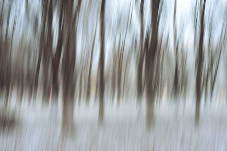 Waltz Of Winter Trees. Impressionism   (Ltd Edition of only 25 Fine Art Giclee Prints from an original photograph)