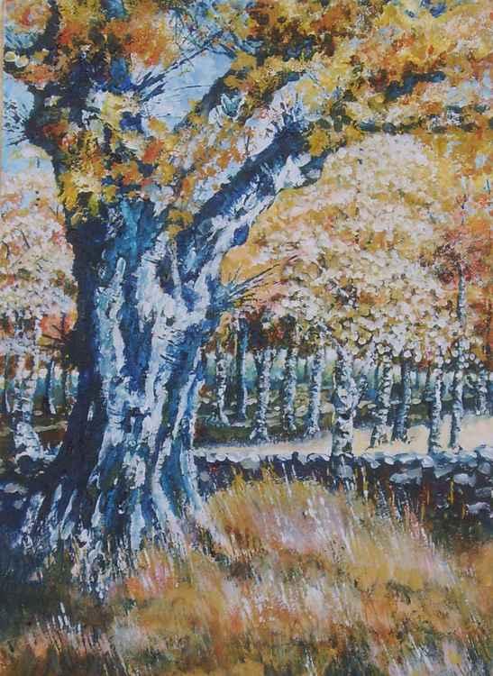 Old Silver Birch in Autumn