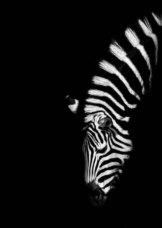 Z is for Zebra -
