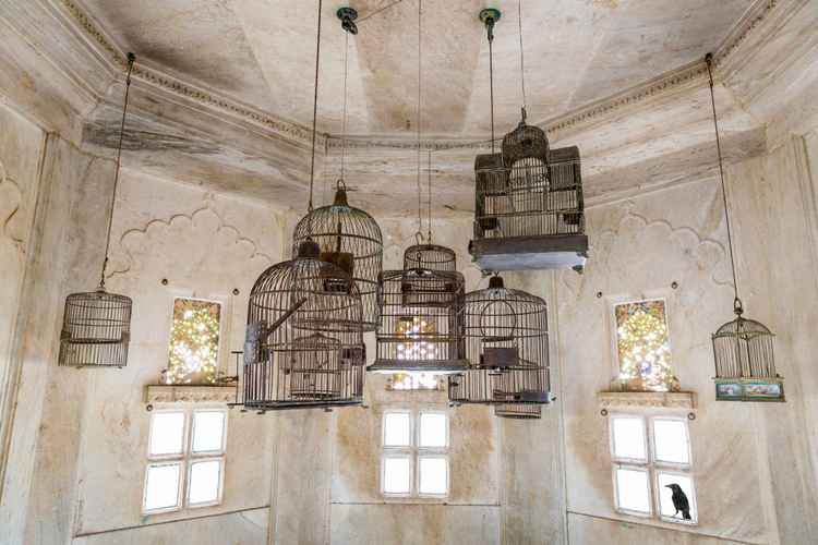 Free in Udaipur -