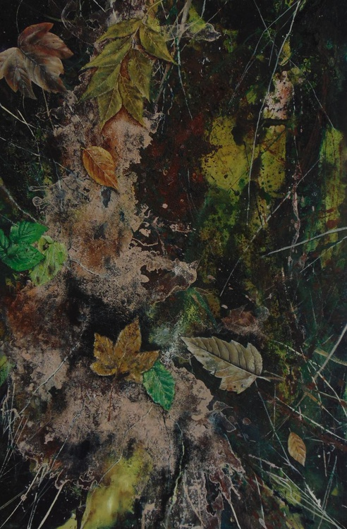 Raincliffe Woods 2 - Image 0