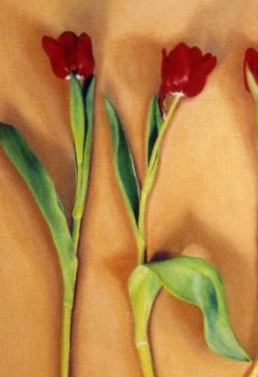 Five Red Tulips - Image 0